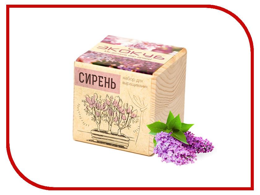 Растение Экокуб Сирень ECB-01-06 сирень w15060278229