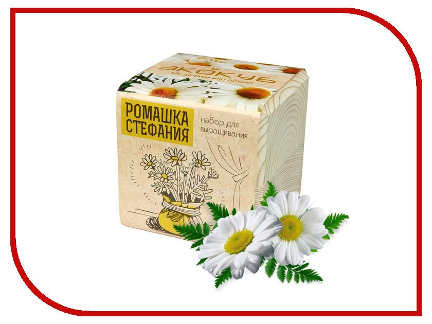 Растение Экокуб Ромашка Стефания ECB-01-19