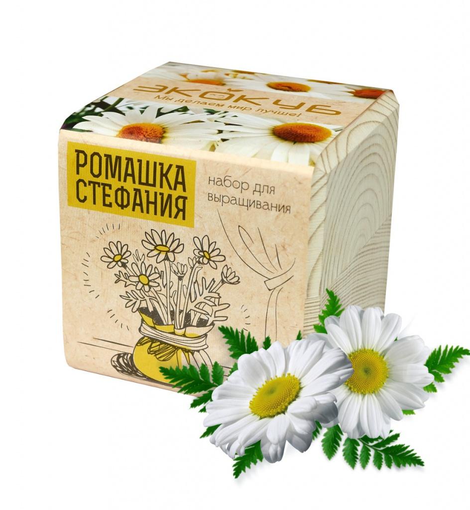 цена на Растение Экокуб Ромашка Стефания ECB-01-19