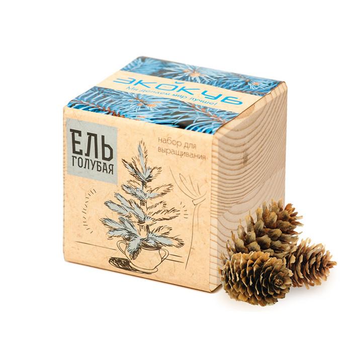 Растение Экокуб Голубая Ель ECB-01-01