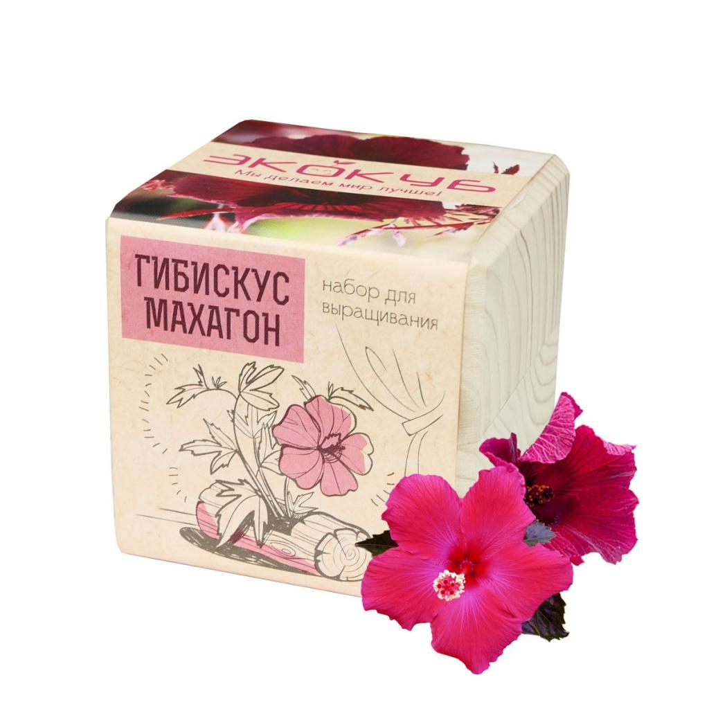 Растение Экокуб Гибискус Махагон ECB-01-20
