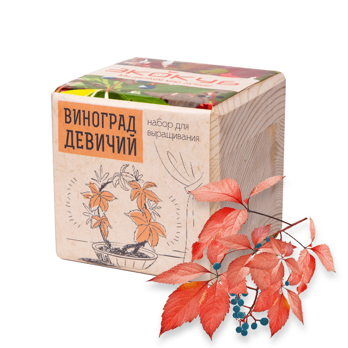 Растение Экокуб Виноград Девичий ECB-01-16