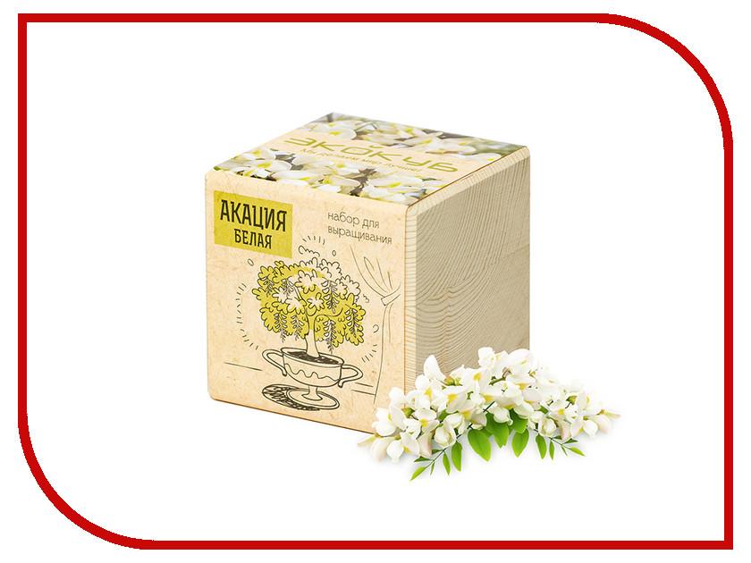 Растение Экокуб Акация белая