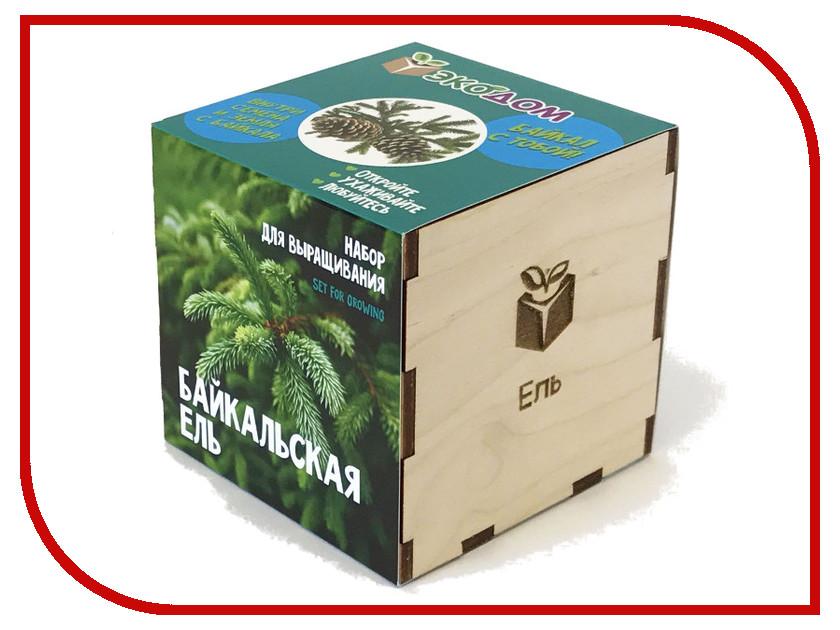 Растение ЭкоДом Ель Байкальская 1061843804520 растение экодом лаванда 1061843804452