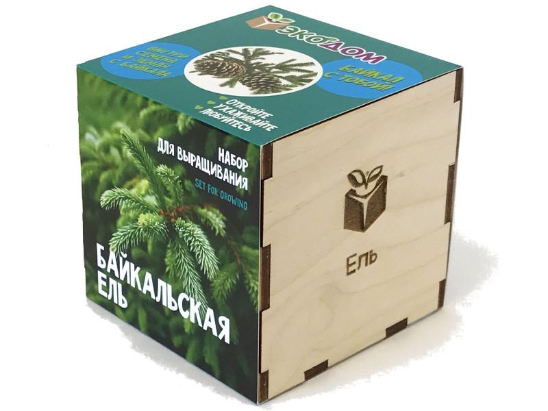 цена на Растение ЭкоДом Ель Байкальская 1061843804520