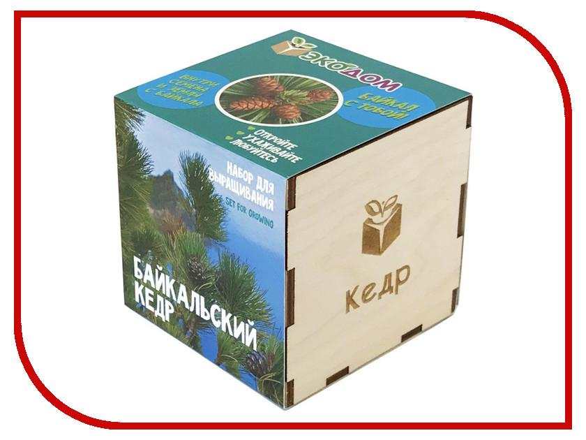 Растение ЭкоДом Кедр Байкальский 1061843804636