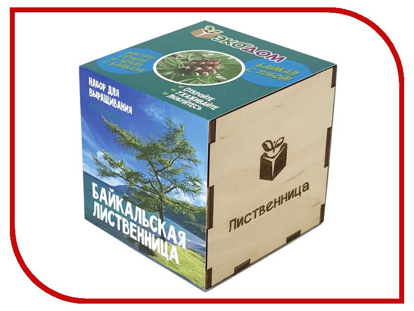 Растение ЭкоДом Лиственница Байкальская 1061843804643 растение экодом лаванда 1061843804452
