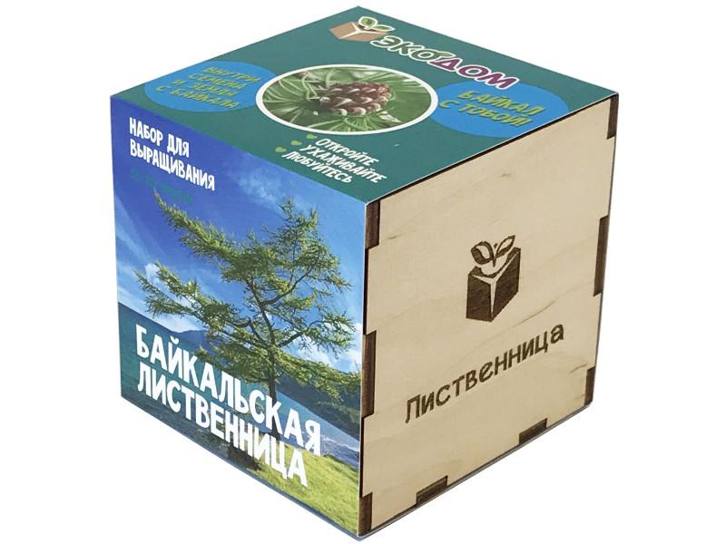 Растение ЭкоДом Лиственница Байкальская 1061843804643