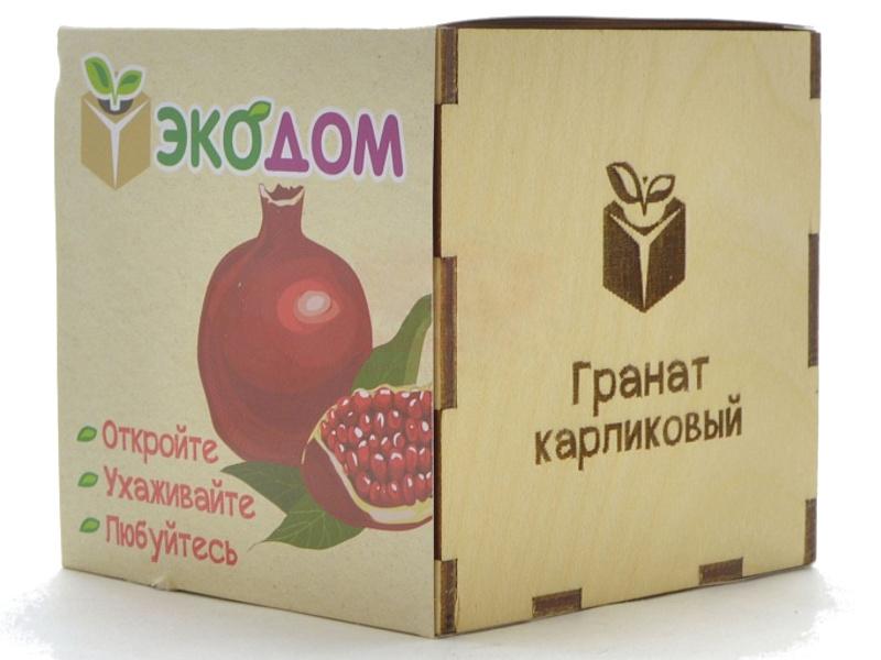 Растение ЭкоДом Гранат Карликовый 1061843804469 цена
