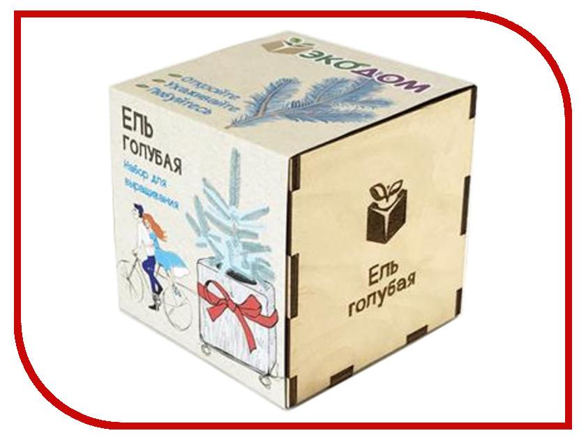 Растение ЭкоДом Ель голубая 1061843804490 растение экодом лаванда 1061843804452