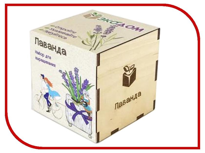 Растение ЭкоДом Лаванда 1061843804452 цена