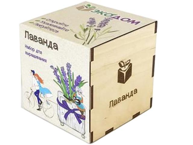 Растение ЭкоДом Лаванда 1061843804452