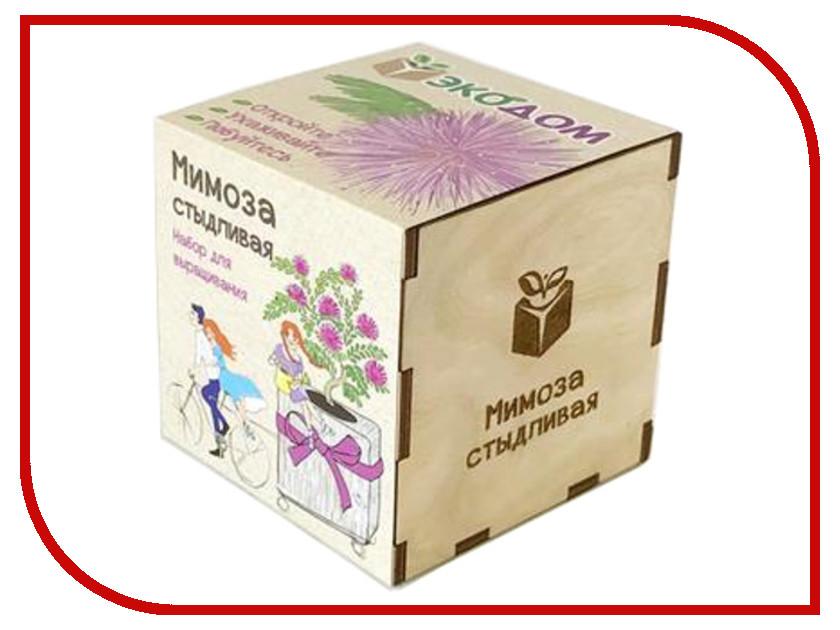 Растение ЭкоДом Мимоза стыдливая 1061843804445 розетка ваш электрик мимоза 4107