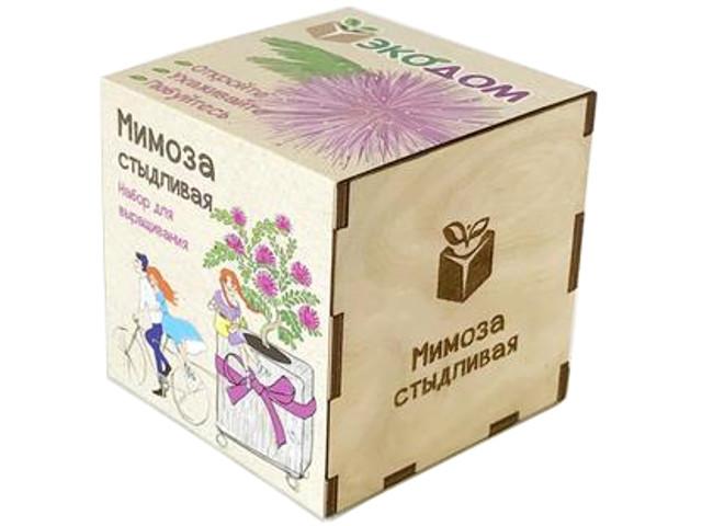 Растение ЭкоДом Мимоза стыдливая 1061843804445