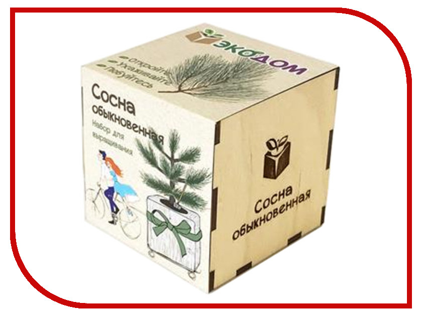 Растение ЭкоДом Сосна обыкновенная 1061843804483 растение экодом лаванда 1061843804452