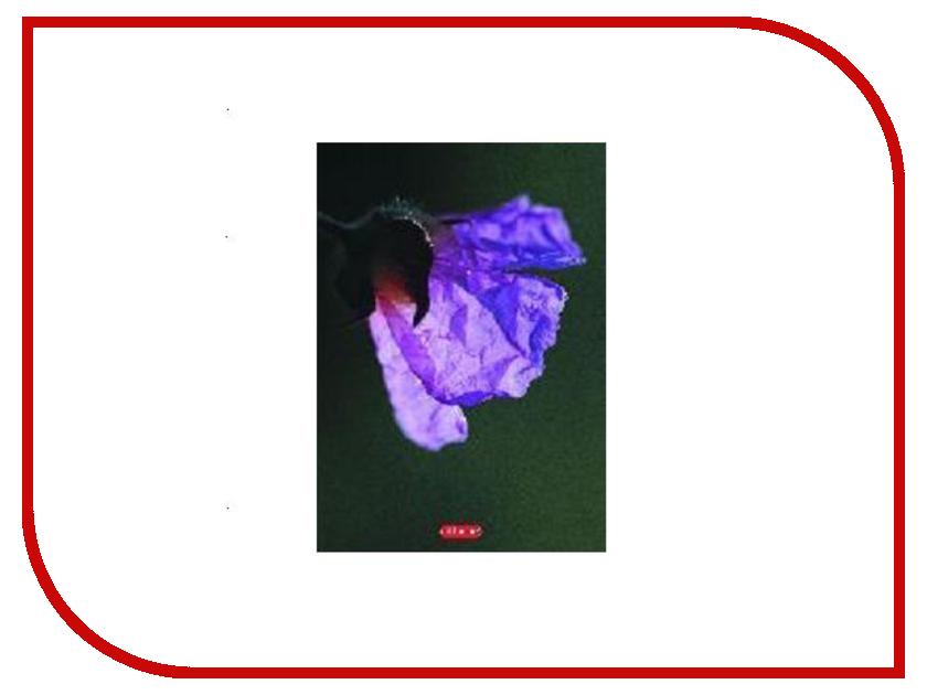 Тетрадь Attache A5 80 листов 92278 блокнот attache fantasy a5 80 листов light blue 309368