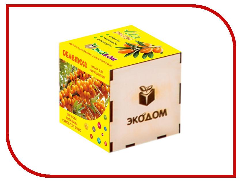 Растение ЭкоДом Облепиха 1061843806968 растение экодом лаванда 1061843804452