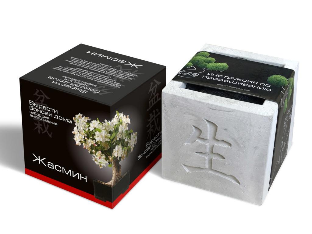 Растение ЭкоДом Вырасти Бонсай дома Жасмин В дизайнерском кубике ручной работы