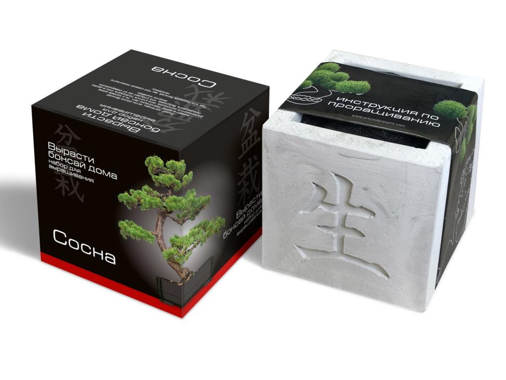 Растение ЭкоДом Вырасти Бонсай дома Сосна В дизайнерском кубике ручной работы