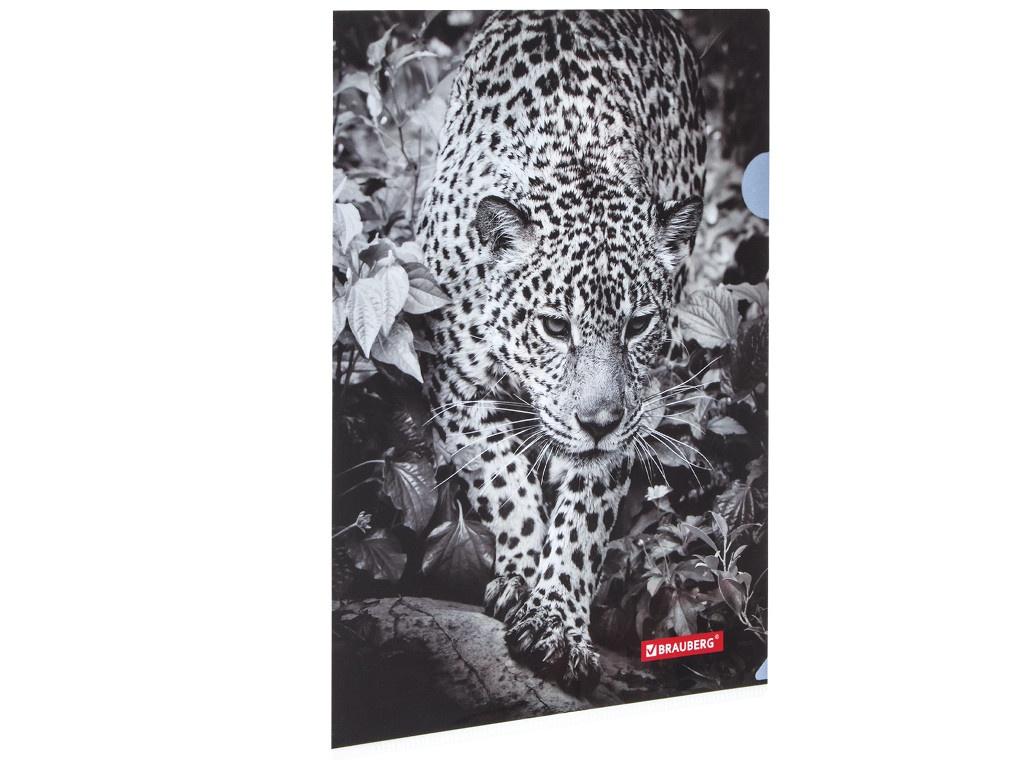 Папка Brauberg Леопард А4 228040