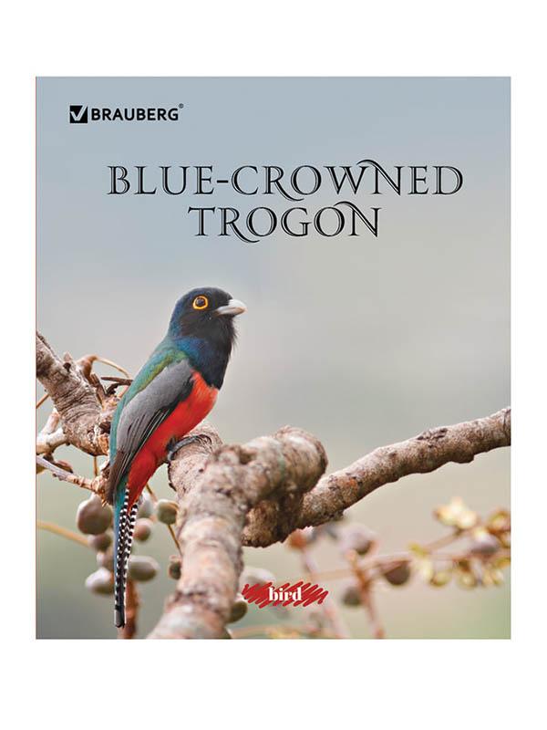 Тетрадь Brauberg Эко Красивые Птицы A5 48 листов 402776