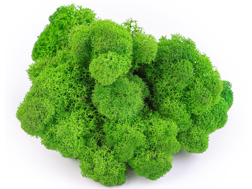 Растение Qrona Мох Ягель 100гр Green MOSS-YAG-GREEN