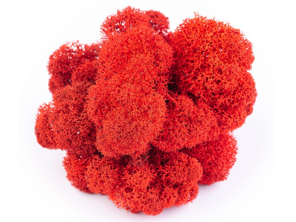 Растение Qrona Мох Ягель 100гр Red MOSS-YAG-RED