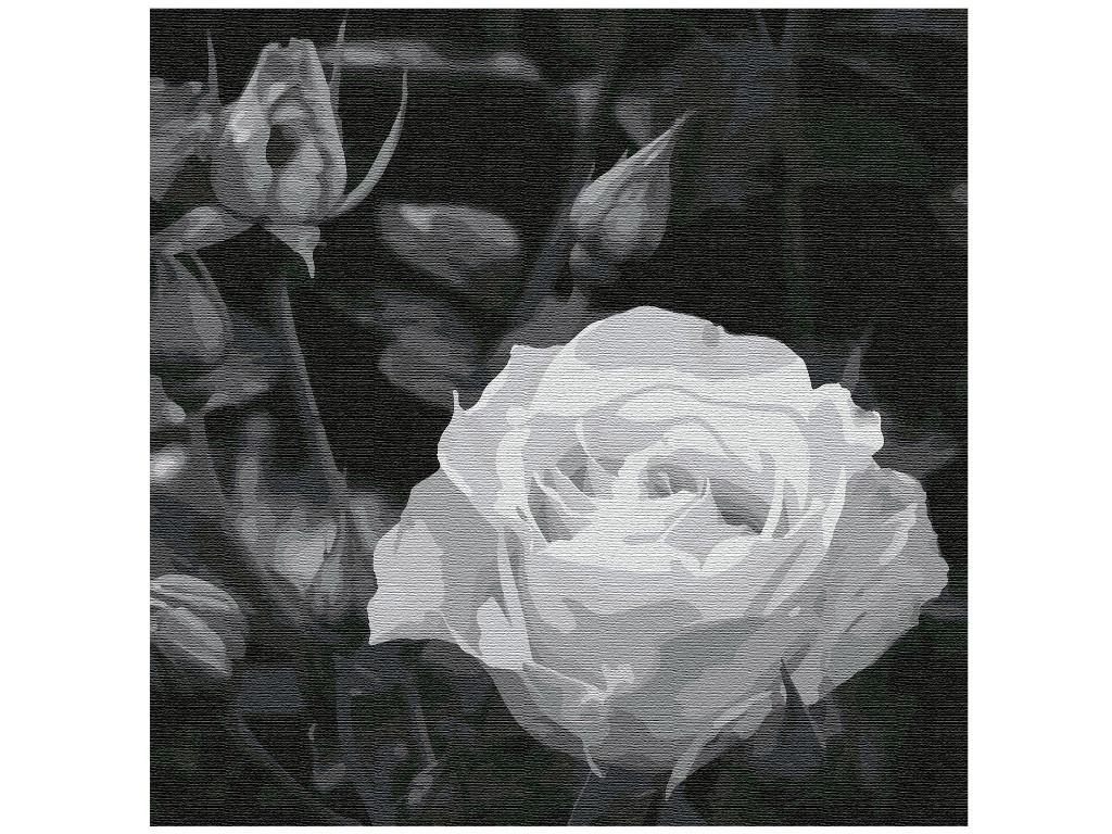 Картина по номерам Котеин Белая роза 30x30cm KHM0035