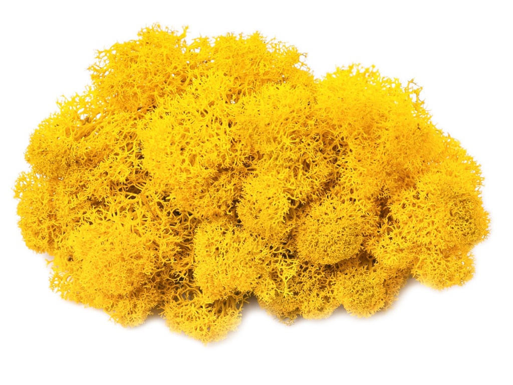 Растение Oktaur Мох Ягель 100g Yellow MOSS-YAG-YELL