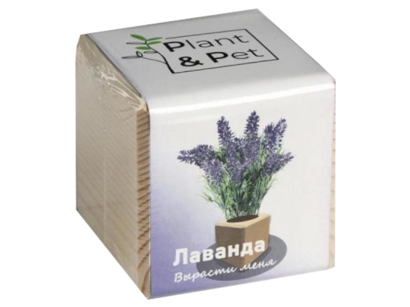 Растение Plant and Pet Лаванда PIPS-11-01