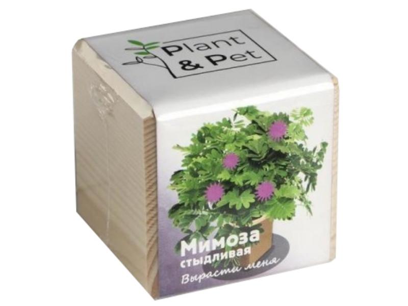Растение Plant and Pet Мимоза стыдливая PIPS-12-01
