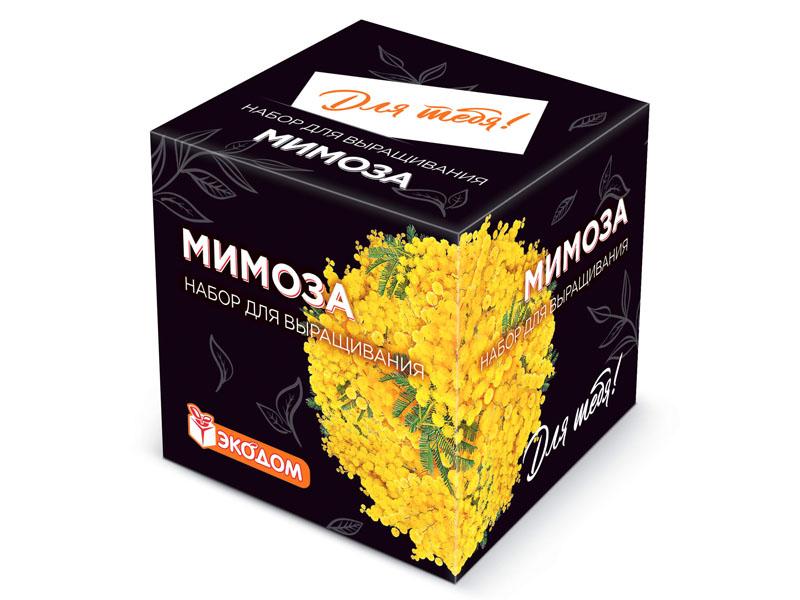 Растение ЭкоДом Для тебя! Мимоза 1061843810408