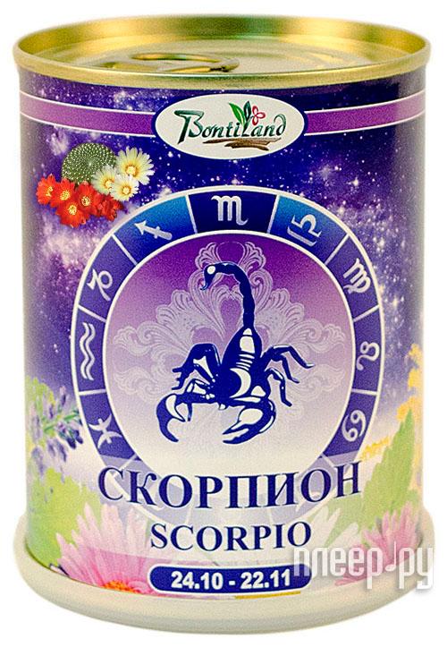 Растение BontiLand Знак зодиака СКОРПИОН Кактусы (Cactaceae) 410619