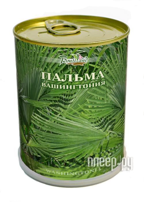 Растение BontiLand Пальма Вашингтония 411180