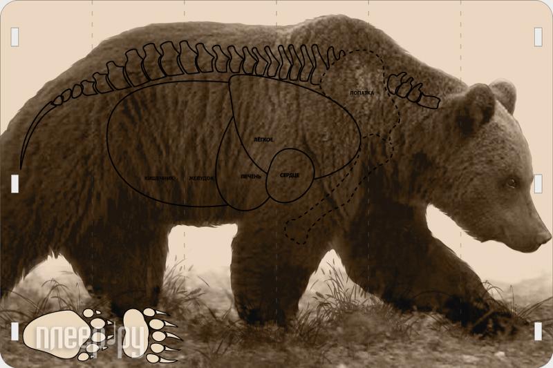 Мишень Медведь  Pleer.ru  255.000