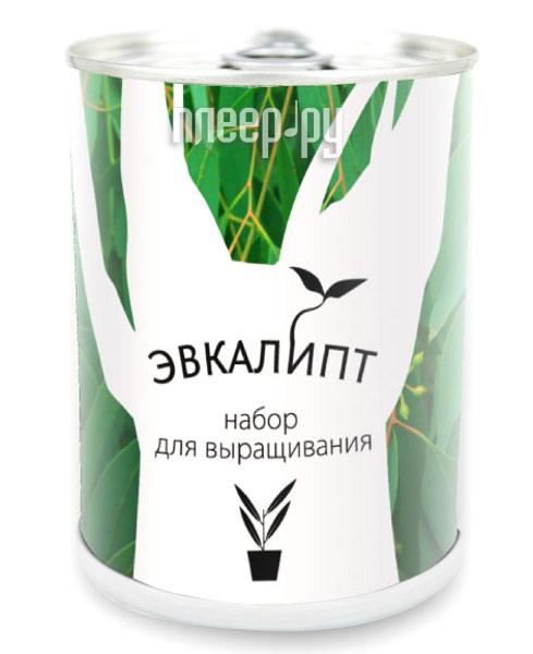 Растение BontiLand Эвкалипт 412361