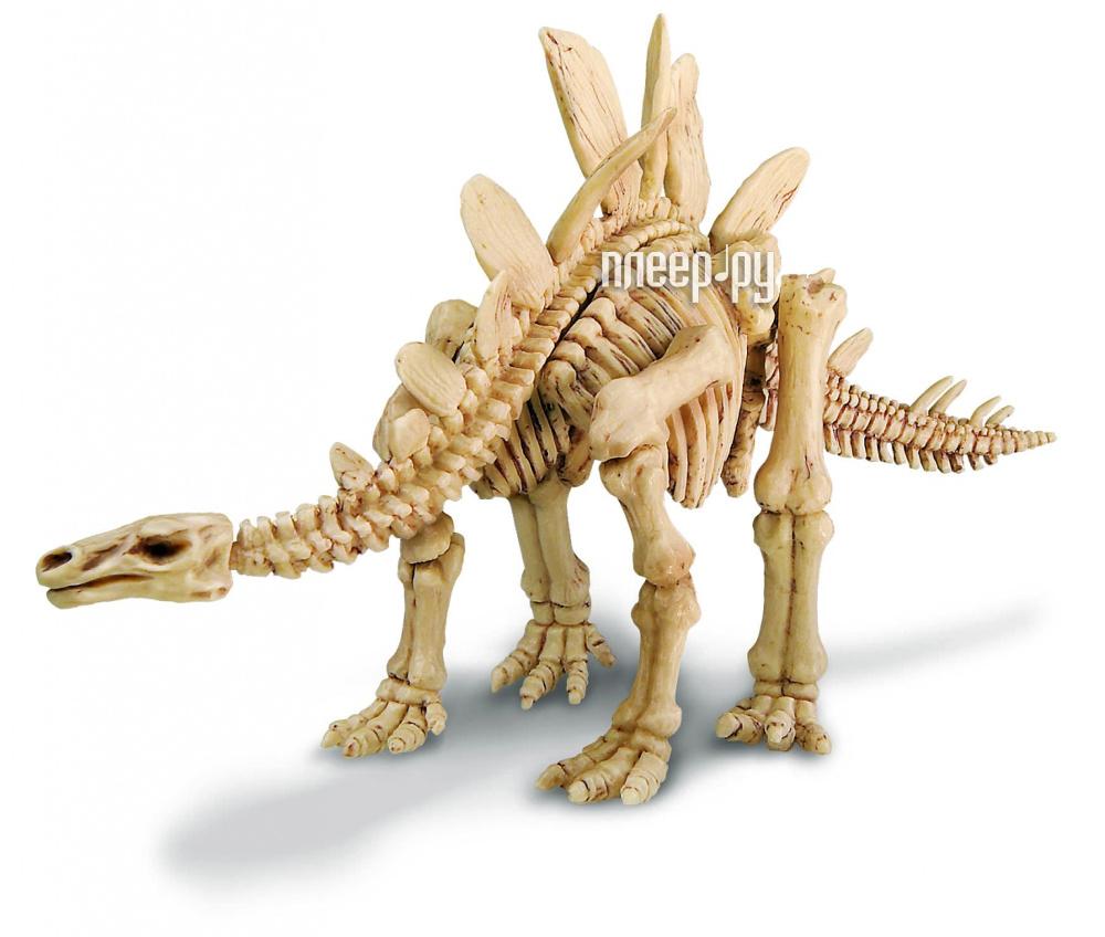 Игрушка 4M Скелет Стегозавра 00-03229