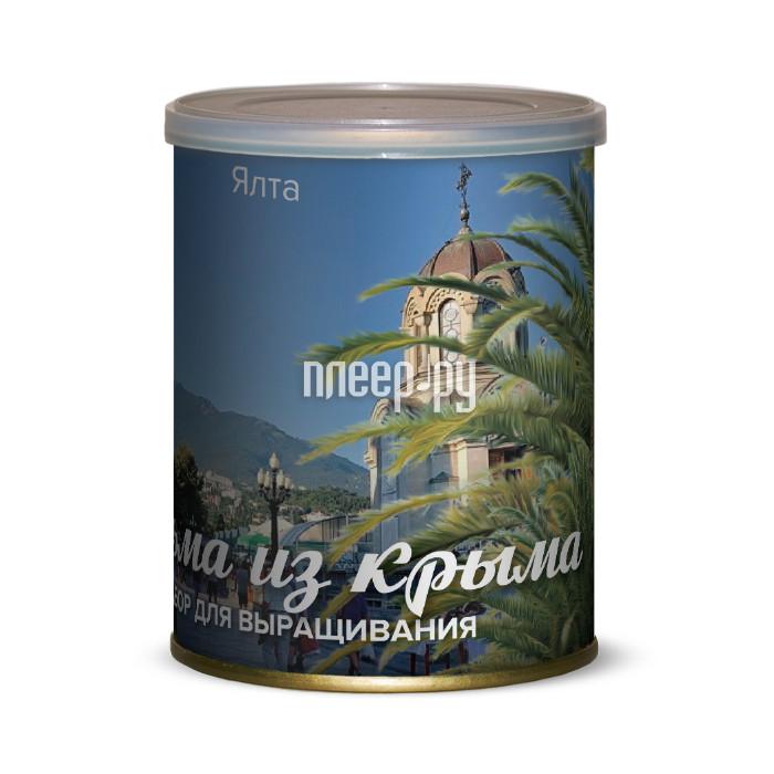 Растение BontiLand Ялта, пальма из Крыма 415034