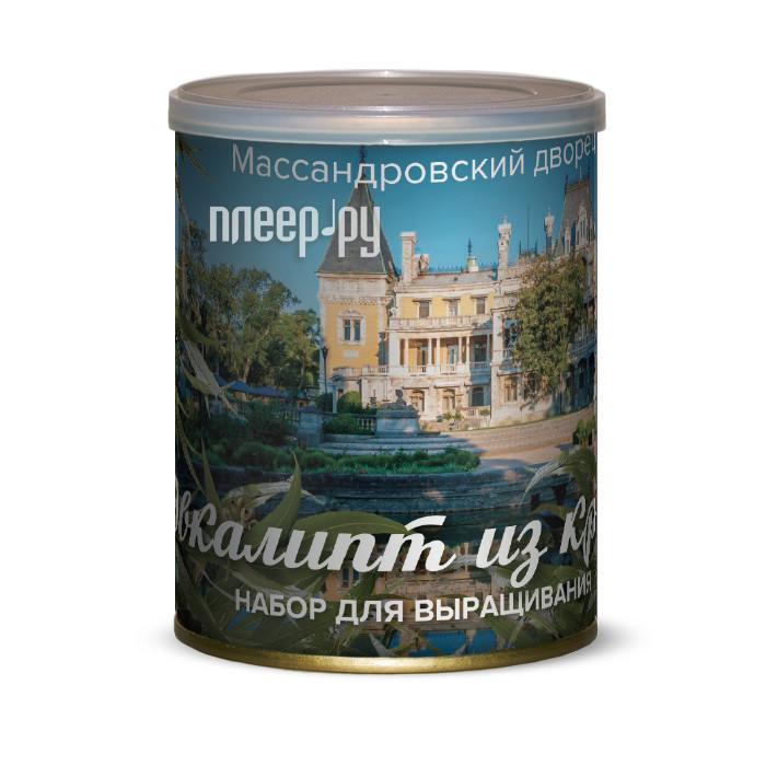 Растение BontiLand Массандровский дворец, Эвкалипт из Крыма 415058