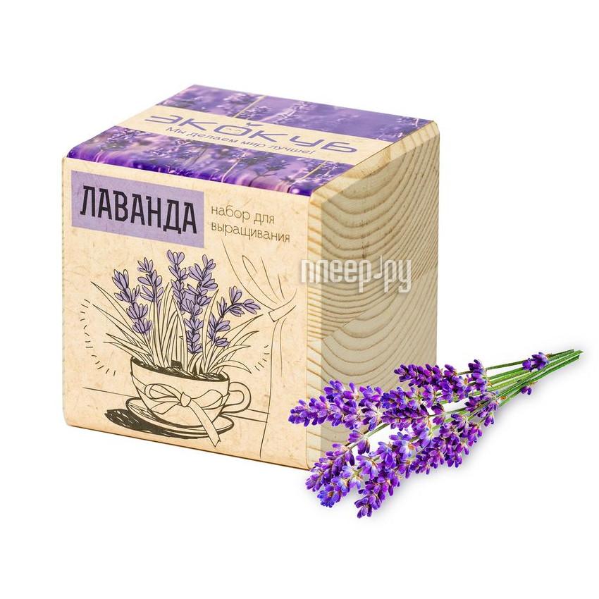 Растение Экокуб Лаванда 3416