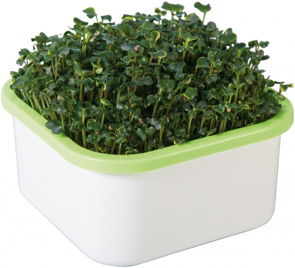 Аэросад Здоровья клад для микрозелени