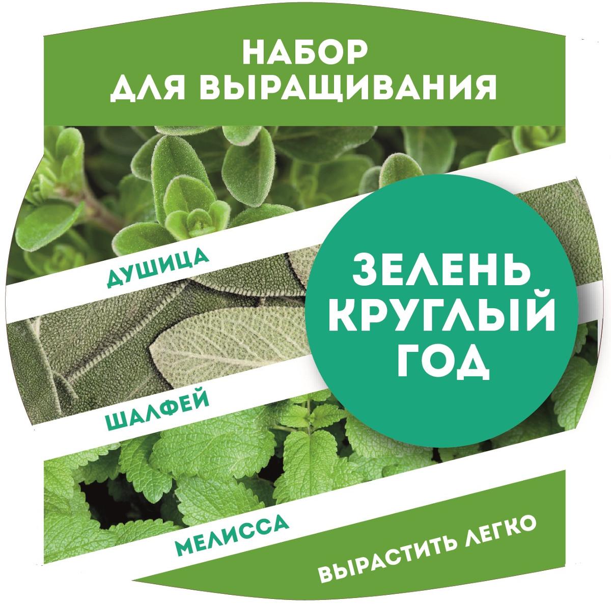 Растение BontiLand Новогодний набор Кедр 414532