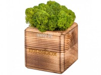 Фото Композиция Эйфорд MossBox Fire Green Cube BOX-01-01